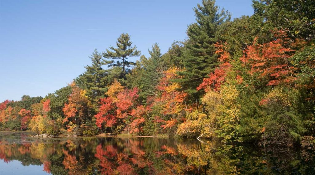 trees at Fall in Andover, Massachusetts