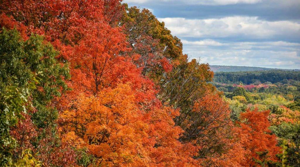 trees in autumn fall Methuen, Massachusetts