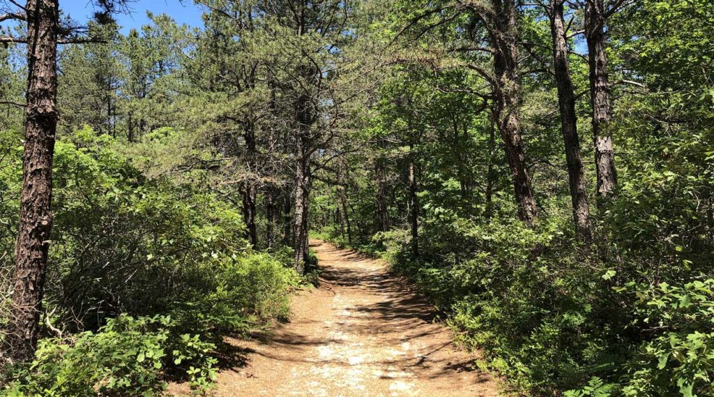 hiking trails near Brookhaven, New York