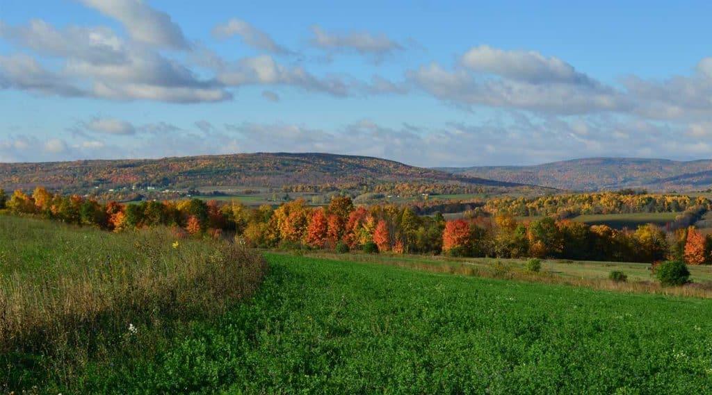 hills near cheektowanga, new york