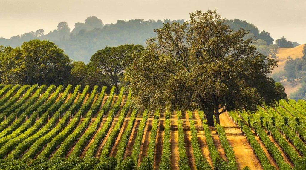 hills in northern california