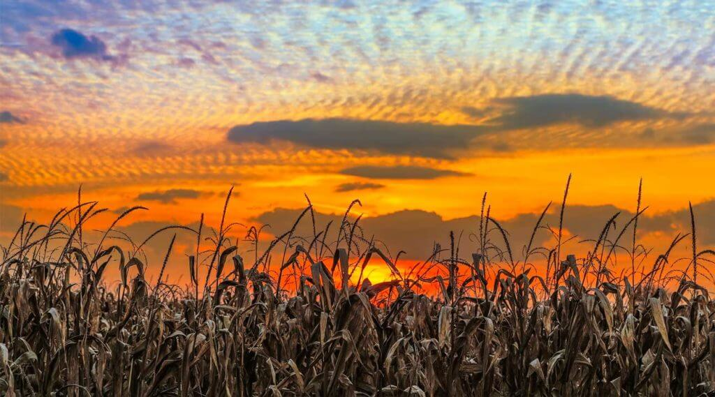 Indiana sky over a cornfield at sunset
