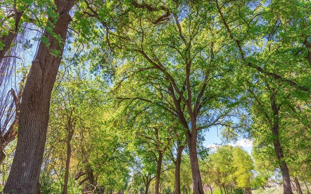 Modesto, California Addiction Treatment Options